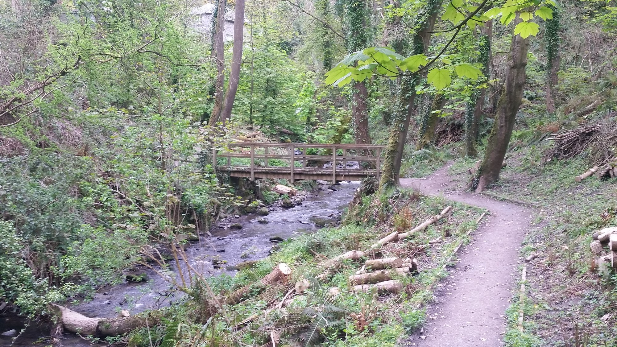 Woodlands at Penbryn