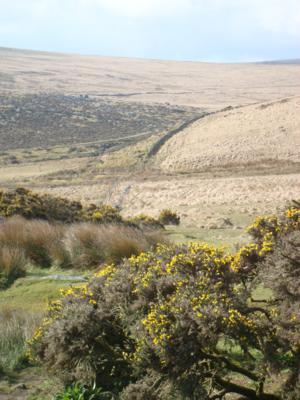 Princetown Moor on The Dartmoor Way South West England