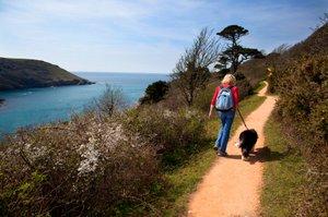 Dog Friendly Coastal Hotels Uk