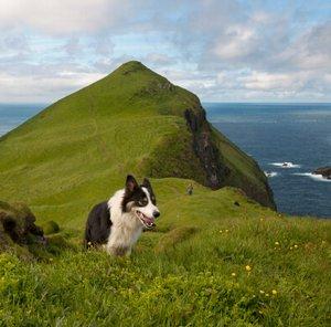 Dog Friendly Accommodation And Walking Holidays Walking Holidays