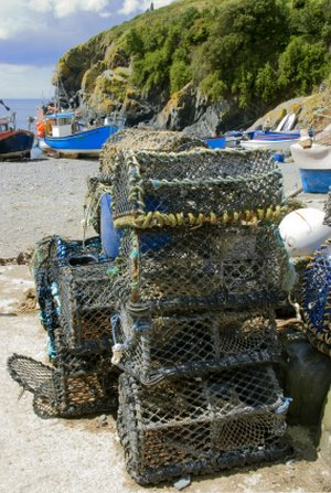 cadgwith walking breaks, lizard walks, south cornwall coast, uk walking holidays