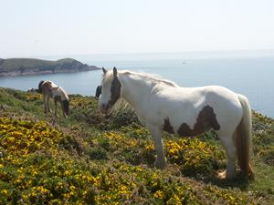 Wildlife on the Pembrokeshire Coastal Path, walks in Wales.