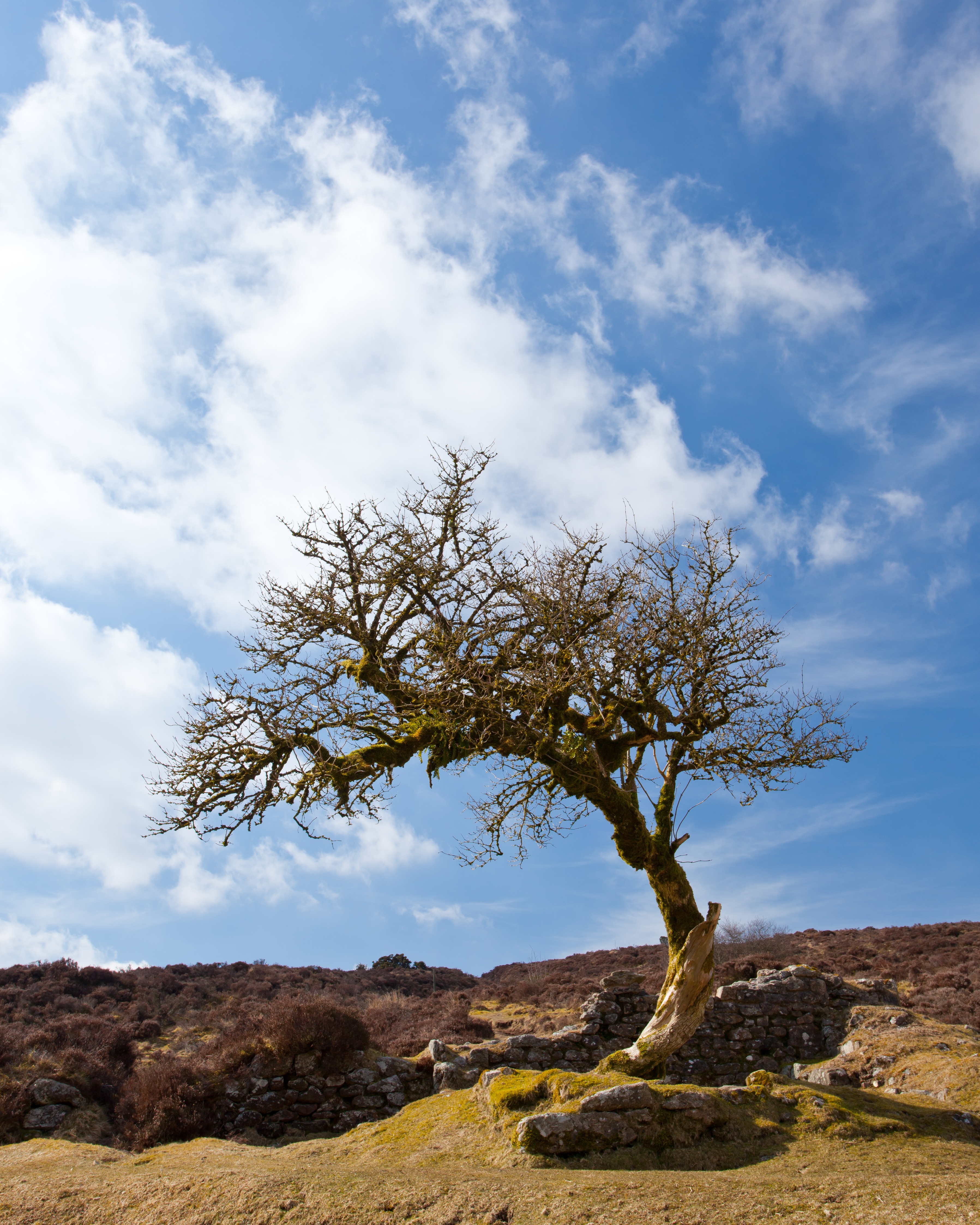 Two Moors Way Walking Holidays -  Dartmoor National Park Section