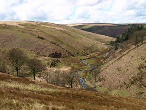 Upper Barle on Exmoor