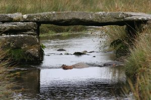 Dartmoor Clapper Bridge 2 Moors Way Devon Walking Holidays UK