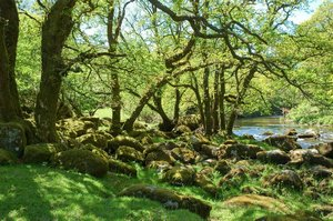 River Dart Devon on the Two Moors Way Self Guided Walking Route UK